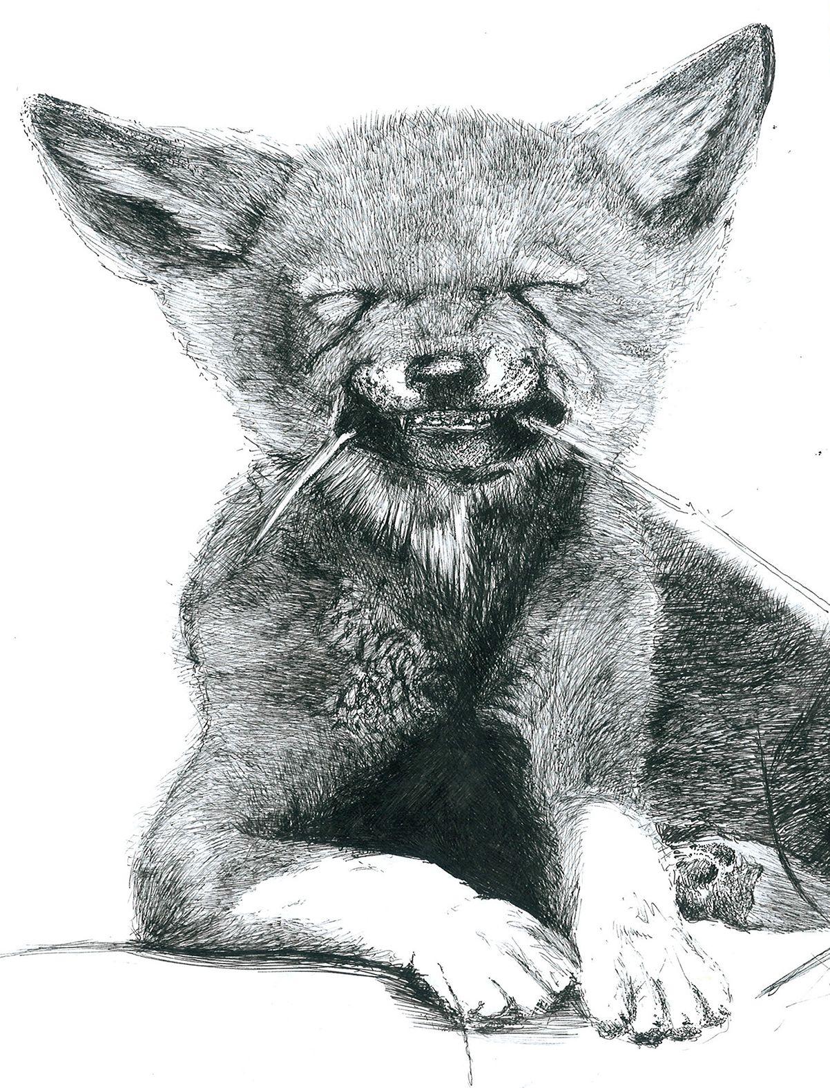 Dessin au crayon renard - Renard en dessin ...