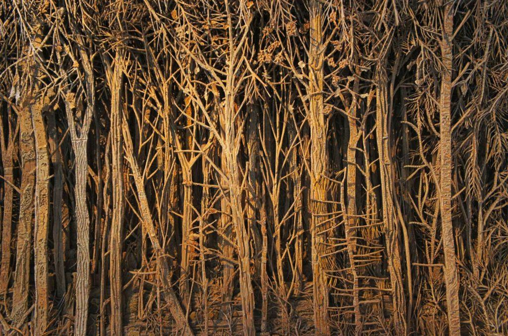 eva jospin forêt carton