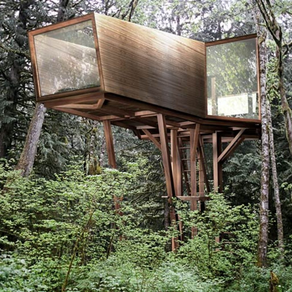 inhabit treehouse